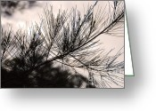 Tropical Photographs Greeting Cards - Pine Tree Needle Silhouette Greeting Card by Ivy Ho