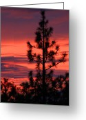 Lassen Greeting Cards - Pine Tree Sunrise Greeting Card by James Eddy
