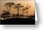 Grayton Beach Greeting Cards - Pines at Sunrise Grayton Beach Florida Greeting Card by John Harmon