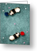 Table Tennis Greeting Cards - Ping Pong Pandas Greeting Card by Michael  Murray