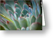 Plants Greeting Cards - Pink and Green Succulent Greeting Card by Kimberly Gonzales