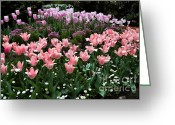 Bellis Greeting Cards - Pink and Mauve Tulips Greeting Card by Louise Heusinkveld