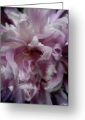 Pink And Purple Greeting Cards - Pink And Purple Greeting Card by Ed Smith