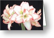 Christmas Card Greeting Cards - Pink and White Amaryllis Group Greeting Card by Frederic Kohli