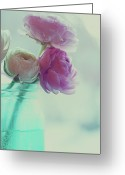 White Flower Greeting Cards - Pink And White Ranunculus Flowers In Vase Greeting Card by Isabelle Lafrance Photography