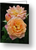 Wien Greeting Cards - Pink and Yellow Roses Greeting Card by Mary Machare