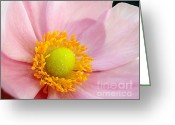 Flower Stamen Greeting Cards - Pink Anemone Greeting Card by Kaye Menner