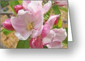 Fine Art Framed Prints Greeting Cards - Pink Apple Blossoms art prints Spring Trees Baslee Troutman Greeting Card by Baslee Troutman Fine Art Photography