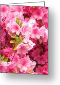 Creative Passages Photo Greeting Cards - Pink Azalea Greeting Card by Cassandra Donnelly