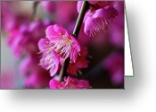 Stamen Greeting Cards - Pink Beauty Greeting Card by I love Photo and Apple.