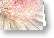 Head Greeting Cards - Pink chrysanthemum with antique distress Greeting Card by Sandra Cunningham