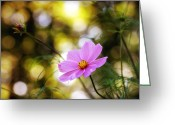 Photography Tk Designs Greeting Cards - Pink Cosmos At Twighlight Greeting Card by Tracie Kaska