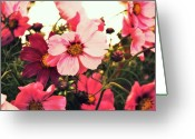 Purple Greeting Cards - Pink Cosmos Greeting Card by Cathie Tyler