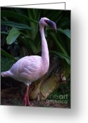 Exotic Birds Greeting Cards - Pink Curiosity Greeting Card by Karen Wiles