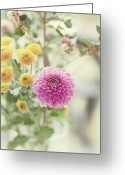 "Dahlia Greeting Cards - Pink Dahlia In Bouquet Of Flowers And Berries Greeting Card by ""Leentje photography"" by Helaine Weide"