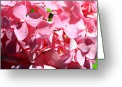 Dana Oliver Greeting Cards - Pink Greeting Card by Dana  Oliver