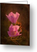 "\""aimelle Photography\\\"" Greeting Cards - Pink Delight Greeting Card by Aimelle"