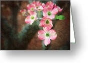 Delicate Mixed Media Greeting Cards - Pink Dogwood Cascade Greeting Card by Andee Photography
