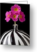 Stripes Greeting Cards - Pink English Primrose Greeting Card by Garry Gay