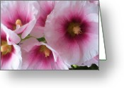 Flower Still Life Prints Painting Greeting Cards - Pink-faced Hollyhocks Greeting Card by Liz Evensen