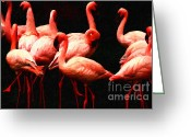 Dances Greeting Cards - Pink Flamingos . Painterly Greeting Card by Wingsdomain Art and Photography