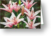 Bud Mixed Media Greeting Cards - Pink Floral Choir Greeting Card by Andee Photography