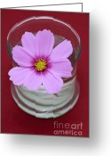 "\""floral Still Life\\\"" Greeting Cards - Pink Flower Greeting Card by Frank Tschakert"