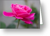 Milos Dacic Photo Greeting Cards - Pink flower Greeting Card by Milos Dacic