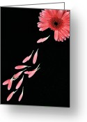 Stamen Greeting Cards - Pink Flower With Petals Greeting Card by Photo by Bhaskar Dutta