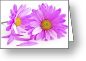 Valentine Tenderness Greeting Cards - Pink flowers Greeting Card by Elena Elisseeva