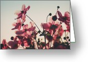 Denmark Greeting Cards - Pink Flowers In Back Light Greeting Card by Julia Davila-Lampe