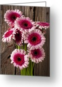 Wall Greeting Cards - Pink Gerbera daisies Greeting Card by Garry Gay