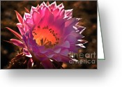 Arizona Greeting Cards Greeting Cards - Pink glow Greeting Card by Robert Bales
