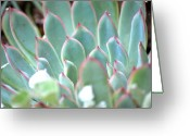 Plant Greeting Cards - Pink Highlights Greeting Card by Kimberly Gonzales