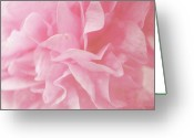 Hollyhock Greeting Cards - Pink Hollyhock Flower Greeting Card by Sarah Cowan Photography