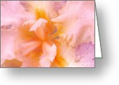 Cindy Longhini Greeting Cards - Pink Iris Greeting Card by Cindy Lee Longhini