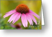 Cone Flower Greeting Cards - Pink is In Greeting Card by Sabrina L Ryan
