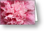 Hollyhock Greeting Cards - Pink Greeting Card by Kristin Elmquist