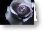 Roses Photos Greeting Cards - Pink Lilac Pastel Rose - Macro Flower Photograph Greeting Card by Artecco Fine Art Photography - Photograph by Nadja Drieling