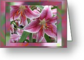 Bold Blossom Greeting Cards - Pink Lily Design Greeting Card by Debra     Vatalaro
