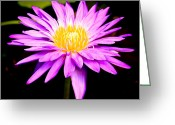 Water Lilly Greeting Cards - Pink Lily Greeting Card by Steve McKinzie
