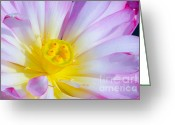 Flower Blossom Greeting Cards - Pink Lotus 4 Greeting Card by Julie Palencia