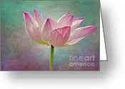 Digitally Enhanced Greeting Cards - Pink Lotus Blossom Greeting Card by Susan Candelario