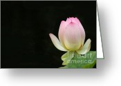 Lotus Bud Greeting Cards - Pink Lotus Bud Greeting Card by Sabrina L Ryan