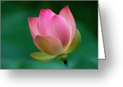 Lotus Bud Greeting Cards - Pink Lotus Flower Greeting Card by David Gunter - Jackson TN
