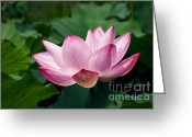 Oriental Flower Greeting Cards - Pink Lotus Leaning Greeting Card by Susan Isakson