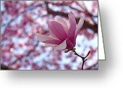 Magnolia Greeting Cards - Pink Magnolia Greeting Card by Rona Black