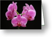 Flower Over Black Photo Greeting Cards - Pink March Madness Greeting Card by Juergen Roth
