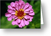 Dana Oliver Greeting Cards - Pink or Lavendar Greeting Card by Dana  Oliver