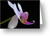 White Orchids Greeting Cards - Pink Orchid Greeting Card by Juergen Roth